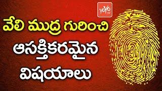 వేలి ముద్ర గురించి ఆసక్తికరమైన విషయాలు | Interesting Things About FingerPrints..  !
