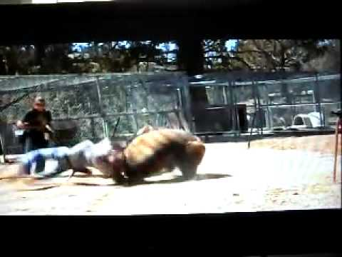 fatal bear attack Music Videos