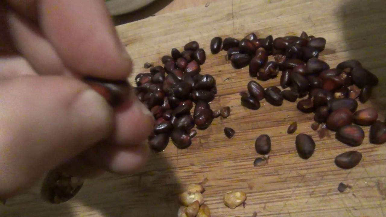Очистить кедровый орех в домашних условиях 135