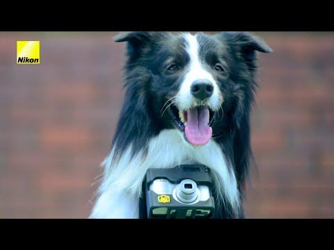Fotografías directamente desde el corazón del perro