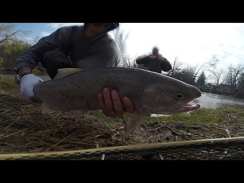 Fishing - Credit River Steelhead Fishing
