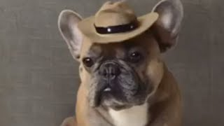 "Man down! Frenchie pulls off dramatic ""bang bang"" trick"