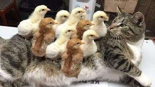 Cat & Dog 😻 🐶 funny videos #2