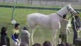 Yukichan - White Thoroughbred