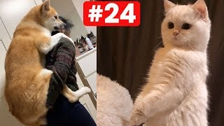 I Love Pets #24 ♥ Funny - Cute Cats and Dogs Videos
