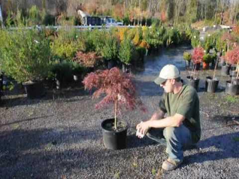 Buy Trees  From Us RRR TTT YYY