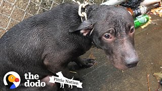 Cop Finds A Pit Bull Chained Up In The Rain | The Dodo Pittie Nation