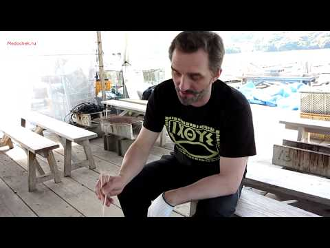 Как готовить устрицы.Japan Andrey Medonos