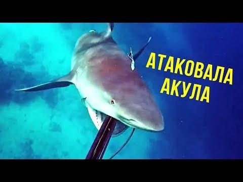 5 ШОКИРУЮЩИХ моментов на рыбалке, снятых на камеру