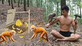 Primitive Technology: Amazing Quick Monkey Trap Using Bamboo