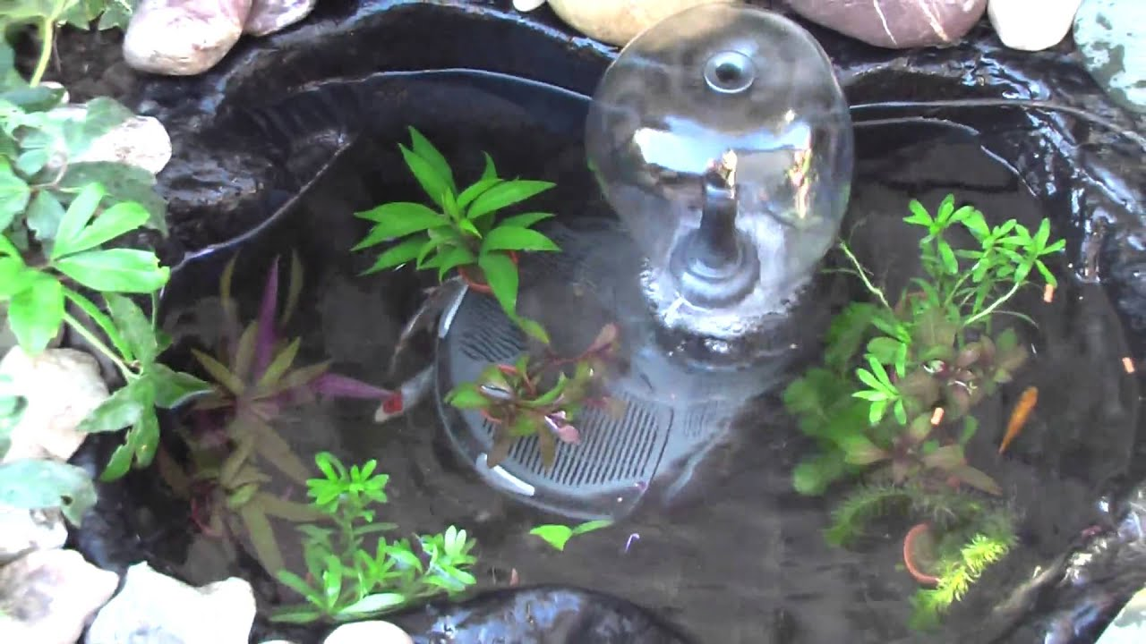My mini fish pond with youtube for Mini koi fish