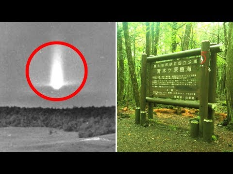 5 Unsolved Forest Mysteries From Around The World #2