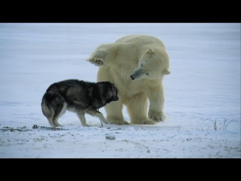 Not just a man's best friend! - Nature's Weirdest Events - Episode 1 - BBC Two