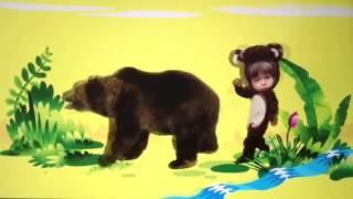 Ninsi bear
