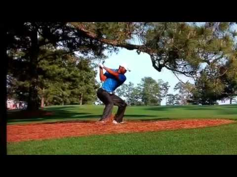Tiger Woods from under the Eisenhower Tree