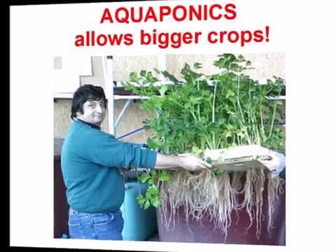 Italian Aquaponics presentation: cultivating fish and vegetables together for food and income!