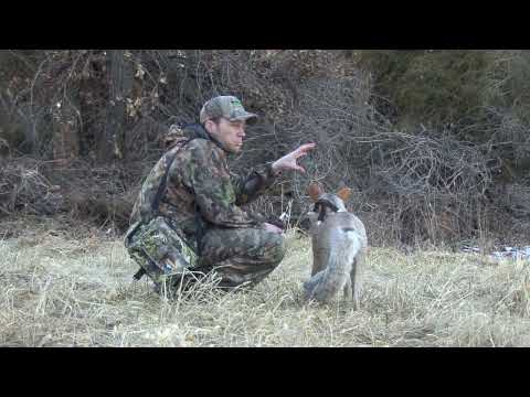 TBR Outdoors - Coyote Hunting - Yipping Coyotes get 15 Yards from MOJO Critter and Lone Howler