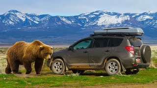 Tips for Car Camping in Bear Country (and Sleeping in Your Car!)