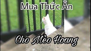 [Vlog] Mua Thức Ăn Cho Mèo Hoang [Cuộc Sống Ở USA]