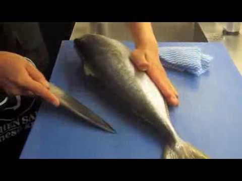 how to fillet kingfish with deba knife   youtube