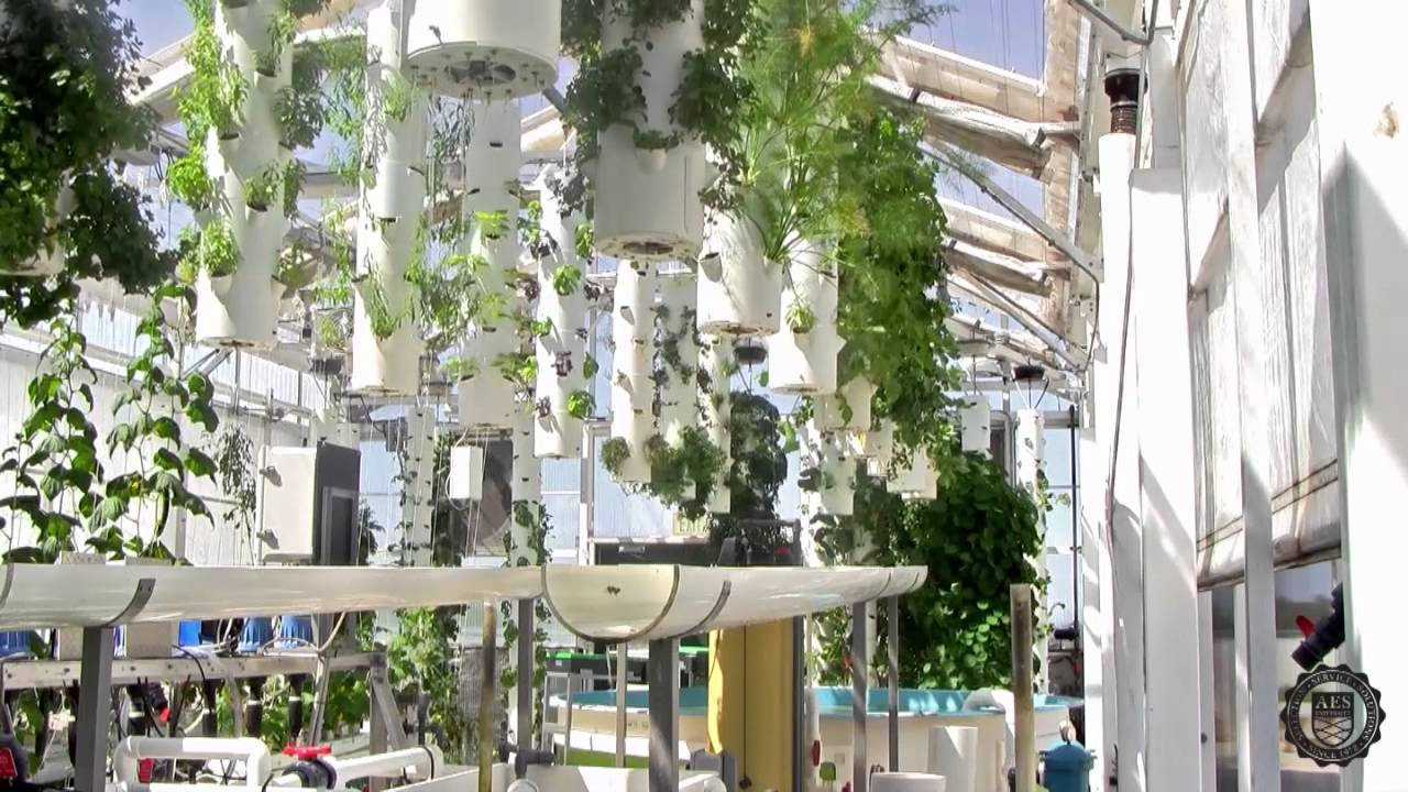 Green Sky Growers Hydroponic Rooftop Greenhouse North