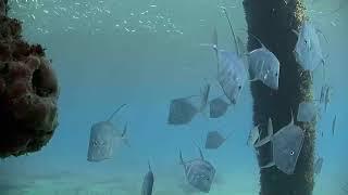 Deerfield Underwater Cam 07-04-2018 14:31:49 - 15:31:53