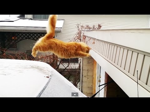 Waffles The Terrible - Cat Fails Jump From Snow-Covered Car (HD)