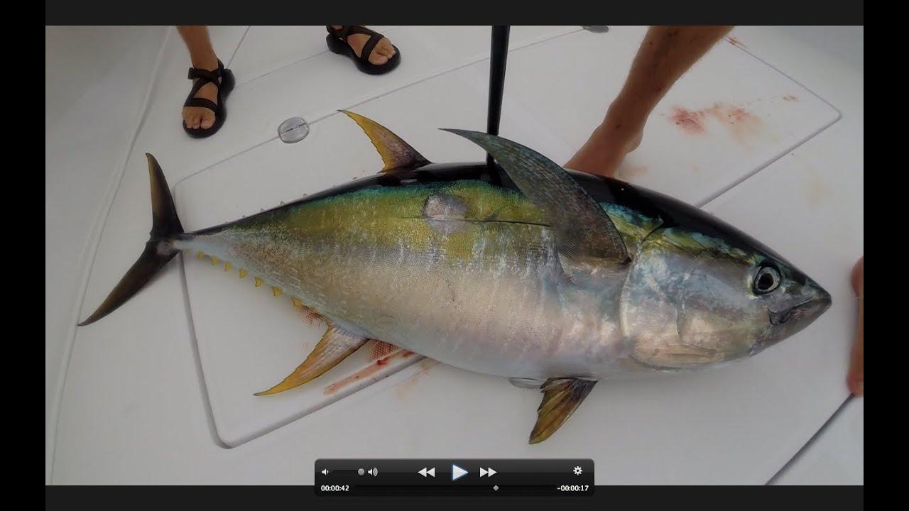 Tuna time deep sea fishing out of louisiana youtube for Deep sea fishing louisiana