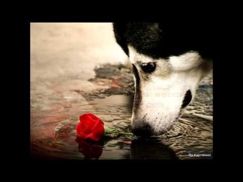 Jandro - Как Мне Тебя Разлюбить