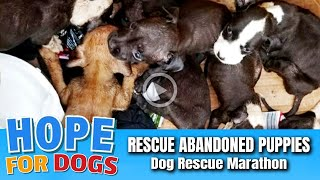 Hope For Paws Rescue Abandoned Puppies in Burned-Out House