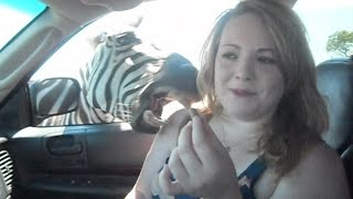 Drive-Thru Safaris Are Awesome: Compilation