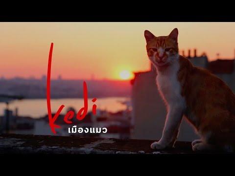 kedi : เมืองแมว   ตัวอย่างภาพยนตร์ บรรยายไทย