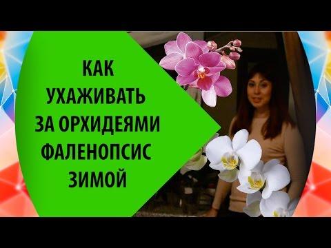 Как ухаживать за орхидеями в домашних условиях все буде добре