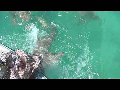 Shark Fishing Key West Style