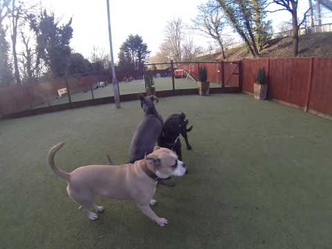 Xena playing in the groups