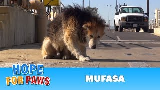 Rescuing a homeless senior dog from a water treatment facility.  Please share.