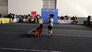 dog funny | funny dog videos | funny dogs compilation | dog | dogs | كلاب مضحكة | chiens drôles