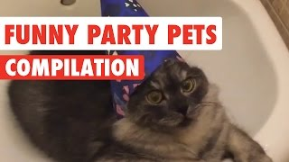 Funny Party Pets Video Compilation 2017