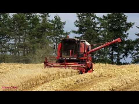 Harvesting Oats with Veteran Deutz-Fahr Combine.