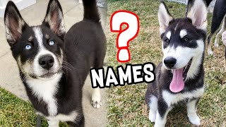 Picking Puppy Names!!
