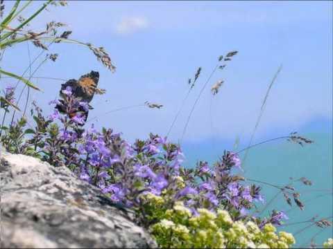 Luigi Boccherini - Minuet From String Quintet Op 13 No 5 In E Major