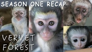 Amazing Baby Orphan Monkey Rescues - The Vervet Forest - Season 1 Recap