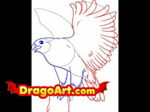 Peregrine Falcon Drawing Step by Step How to Draw a Falcon Step by