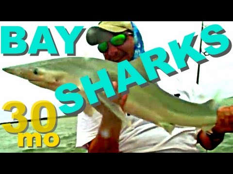 30milesOUT.com #17 -  BULL SHARK inshore KAYAK FISHING how to