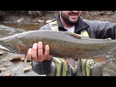 Awesome steelhead fly fishing spring fall 2011 lake erie tribs elk rocky river walnut creek