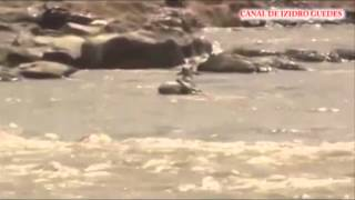 Crocodilo ataca em rio
