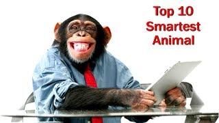বিশ্বের সবথেকে বুদ্ধিমান ১০টি প্রাণী   Top 10 Most Intelligent Animals in World   Smartest Animals
