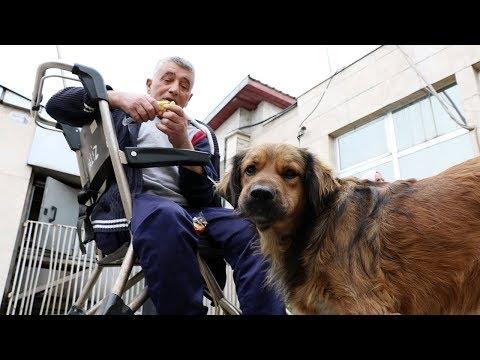 Sahibini Hastane Bahçesinde Bekleyen Köpekten İnsanlık Dersi