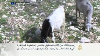 إصابة أكثر من أربعمائة فلسطيني بالحمى المالطية