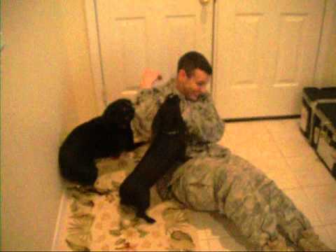Dogs Welcome Home Military Member After Deployment